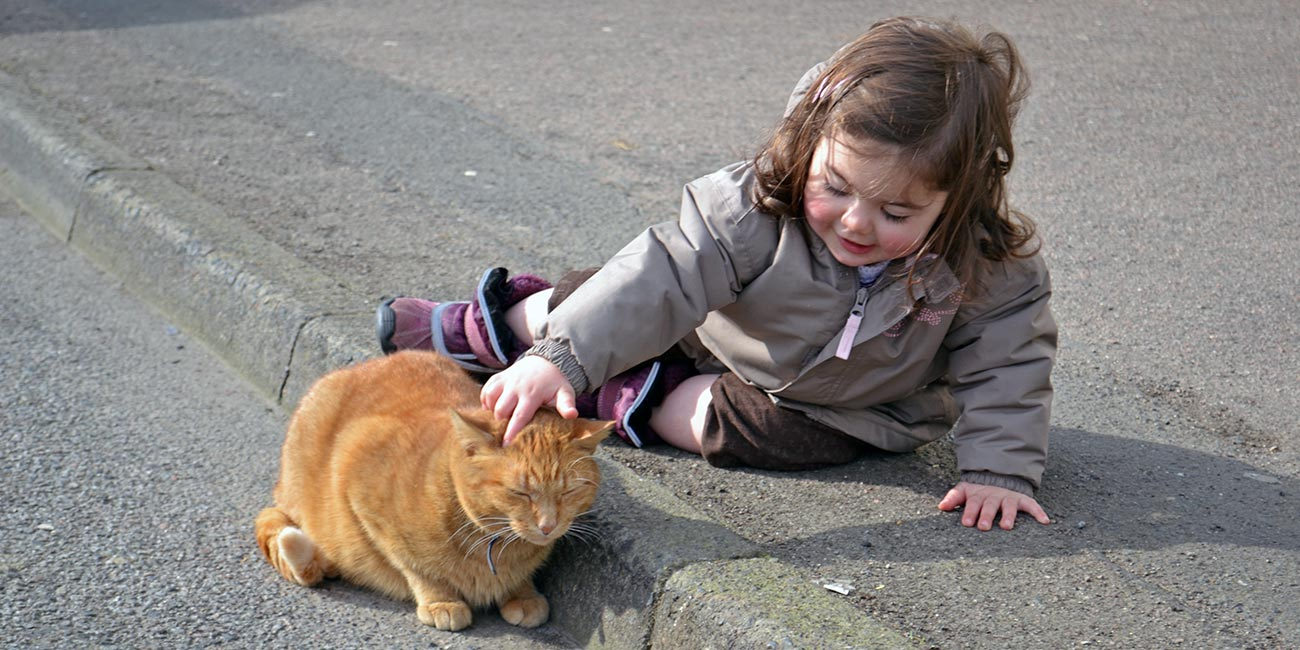 ginger cat with 3-year-old girl